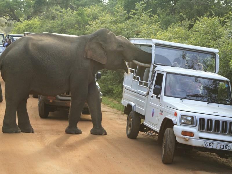7 Days 6 Nights in Sri Lanka - Sri Lanka Tour Package 3