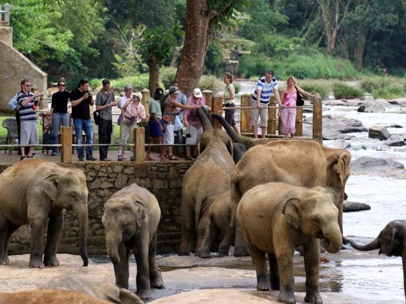 7 Days 6 Nights in Sri Lanka - Sri Lanka Tour Package 4